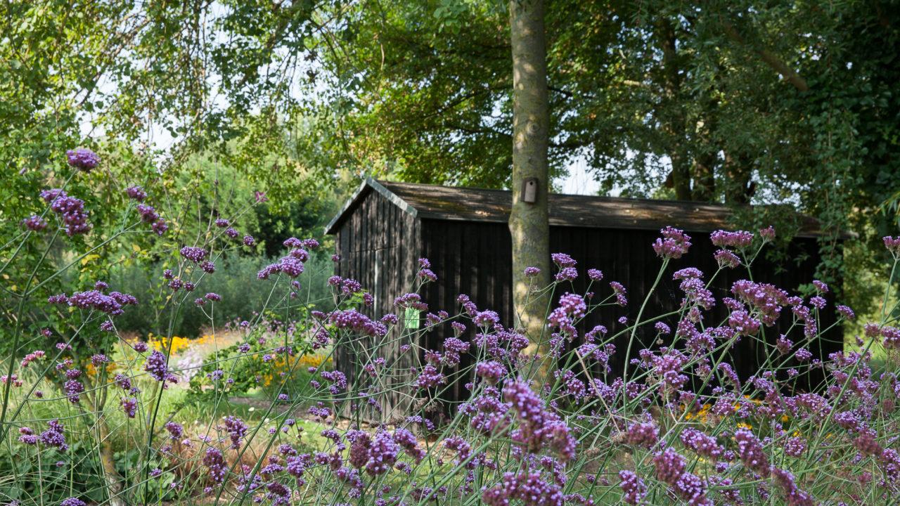 photographie d'un jardin avec des fleurs violettes et jaunes, au fond une cabane en bois noir