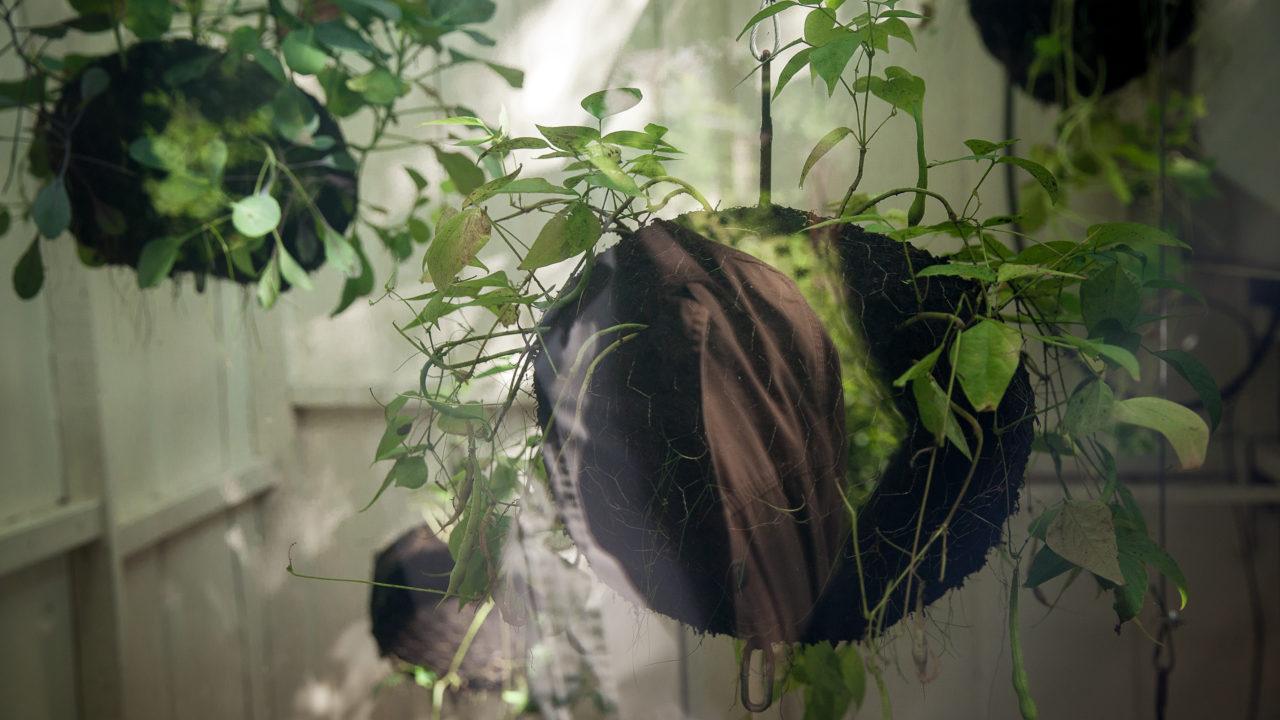 photographie de l'intérieur d'une cabane blanche, il y a des boules de plantations, accrochées au plafond (5)