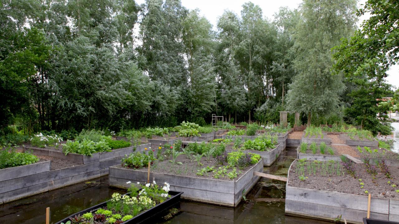 photographie d'un potager avec de nombreuses cultures différentes poussant dans des gros bacs carrés en bois ayant les pieds dans l'eau