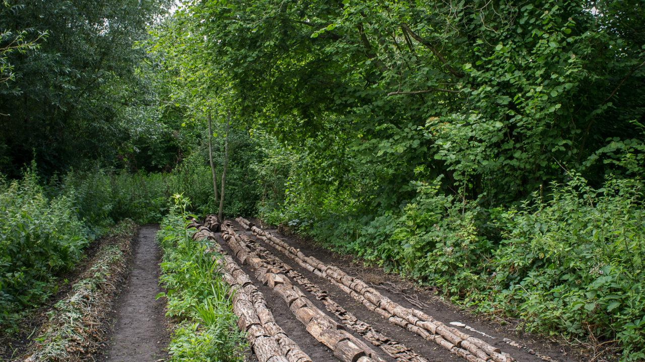 photographie de rangées de bouts de bois mis bout à bout pour créer d'autres rangées sur une parcelle anciennement en friche