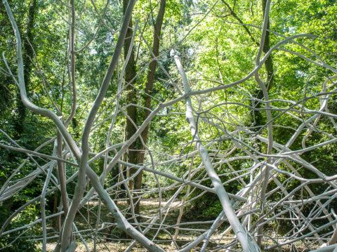 photographie de longues branches fines blanches entremêlées dans un sous-bois.