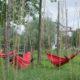 photographie de quatre hamacs rouge accrochés à des troncs. Des ficelles sont tendues en hauteurs un peu partout pour la culture du houblon. Deux personnes se reposent dans les hamacs