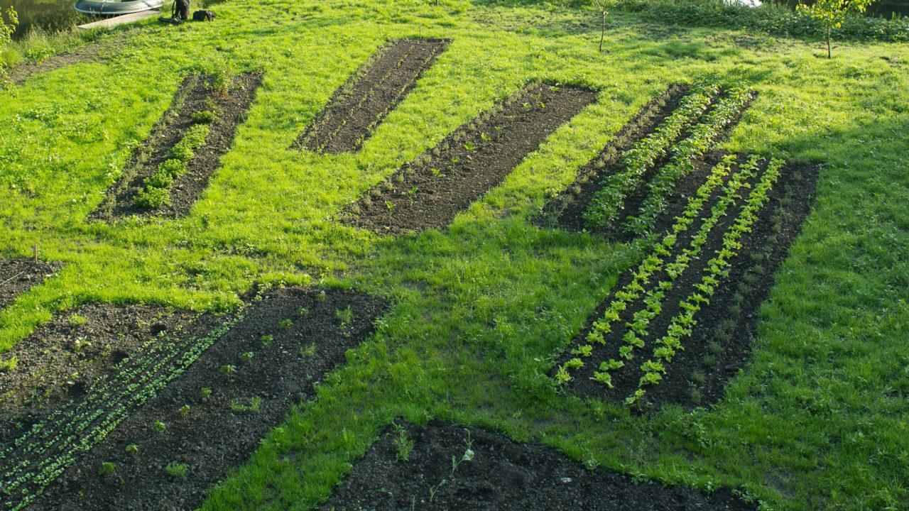 photographie de plans de culture, en rectangle sur une parcelle des Hortillonnages