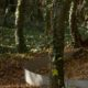 photographie du jardin Cultiver la mémoire, un cercle en acier défini une zone de plantation dans un sous-bois