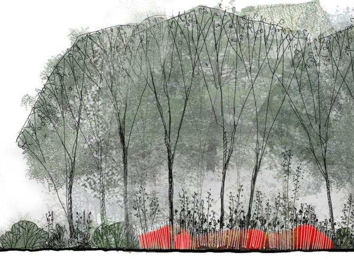 Jardin de la Paix français > Jardin de 100 ans, 2019