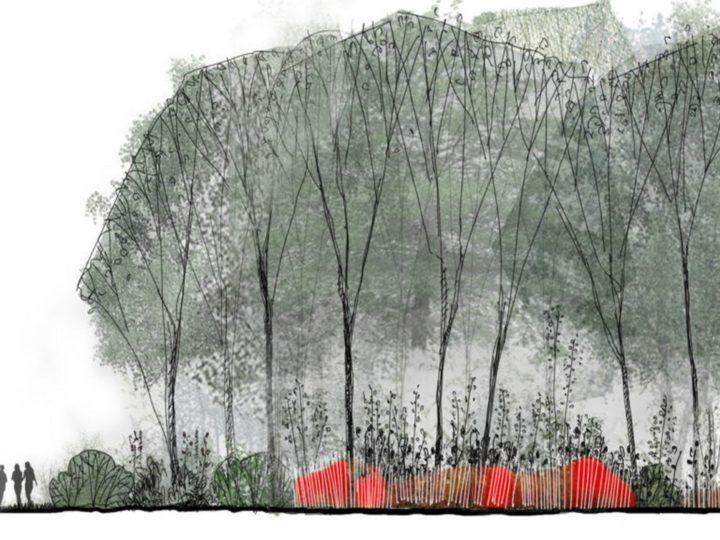 Jardin de 100 ans > Jardin de la Paix français, 2019