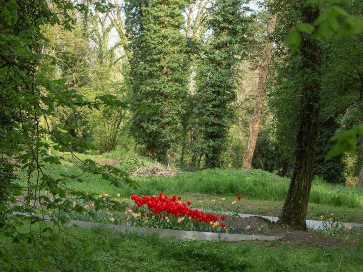 Cultiver la mémoire > Jardin de la Paix allemand, 2018